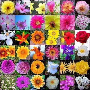 Flores y Colores
