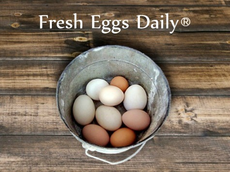 Fresh Eggs Daily Blog