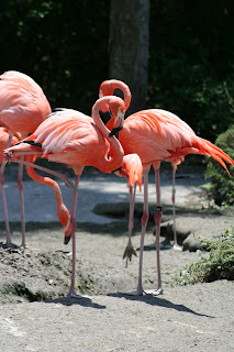 Flamingoes Zoo Miami