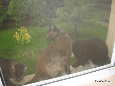 la-fereastra-cu-pisici-1