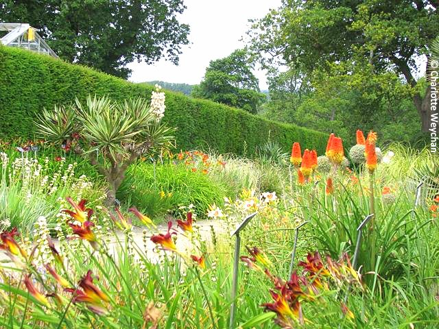Gardens for all seasons rhs wisley the galloping gardener the monocot borders at wisley workwithnaturefo