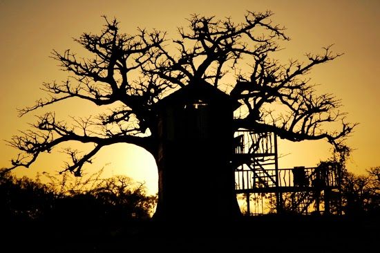 Safari Fusion blog | African treehouses | Baobab tree lodgings at Collines de Niassam Lodge, Senegal