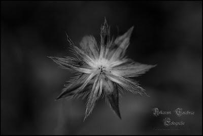 Eine verwelkte Blüte