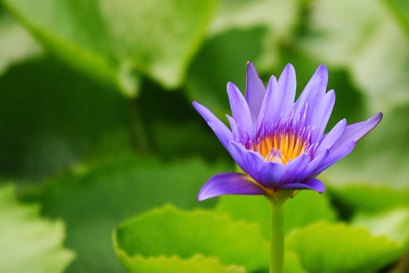Field Notes And Photos The Jewel In The Heart Of The Lotus