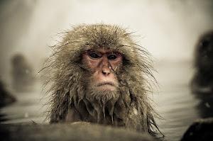 O Monkey de