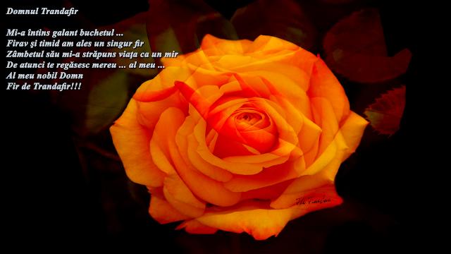 domnul trandafir poezie romania model viata mentor profesor Maria Teodrescu Bahnareanu Wrinkles on my Timeline
