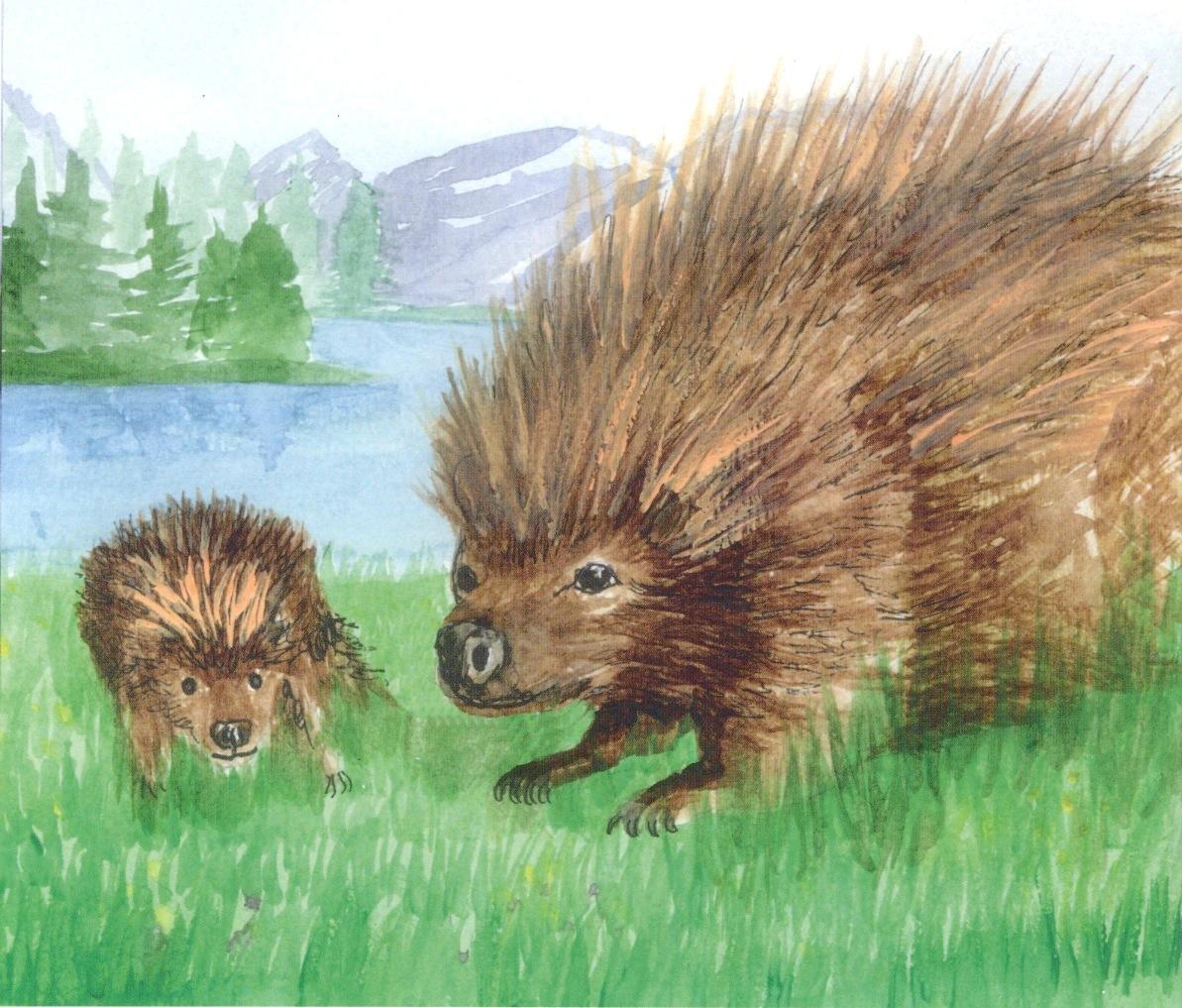 ecofriendly sask canadian animal stories for children