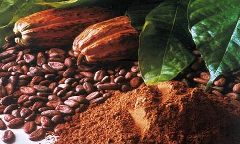 Manfaat Coklat Untuk kesehatan