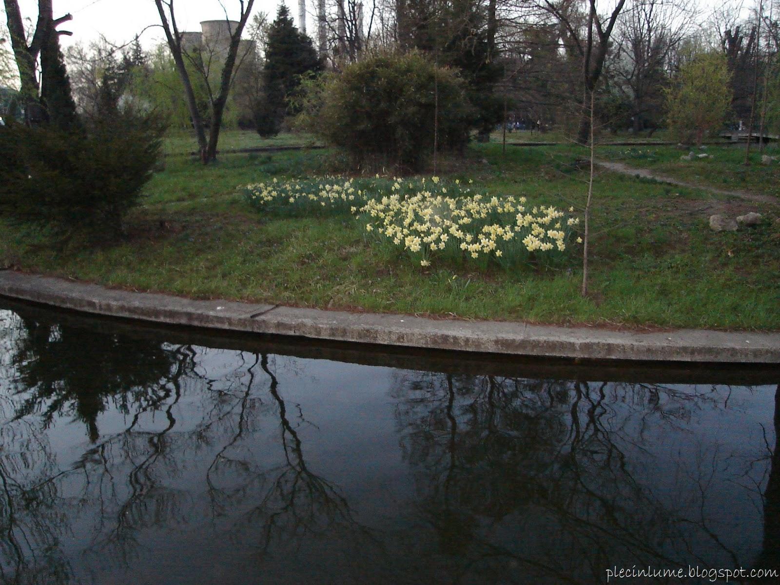 Lacul din Gradina Botanica