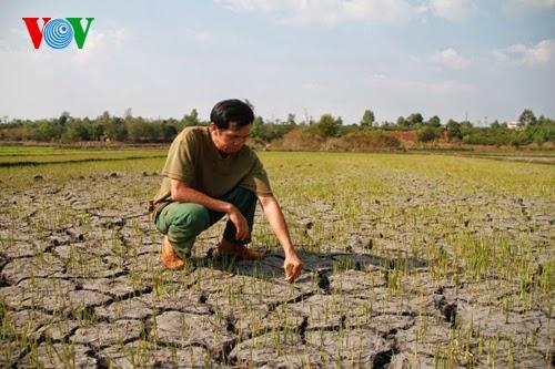 """Hạn hán đến sớm, nông dân Gia Lai """"cầm chắc"""" thiệt hại"""