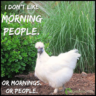 I don't like morning people. Or mornings. Or people. via The Chicken Chick®