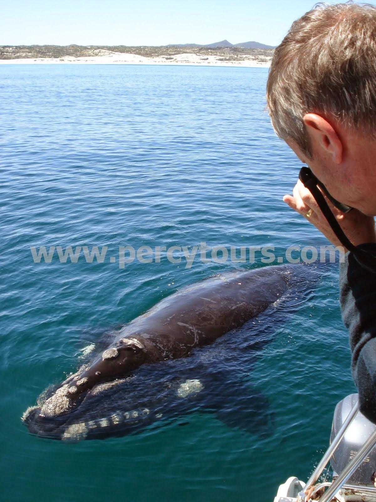 Whale Watching boat trips in Hermanus