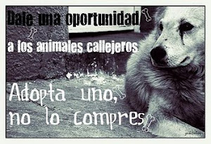 Adopta un animal callejero
