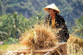 mesin perontok padi