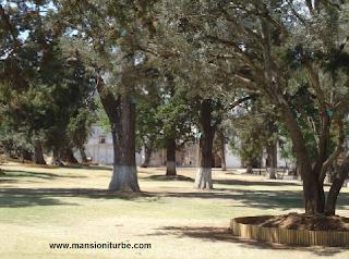 Huerto de los Olivos en Tzintzuntzan