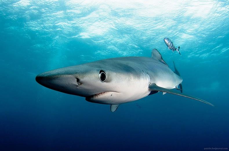 Asombrosas fotografías submarinas de tiburones, delfines y