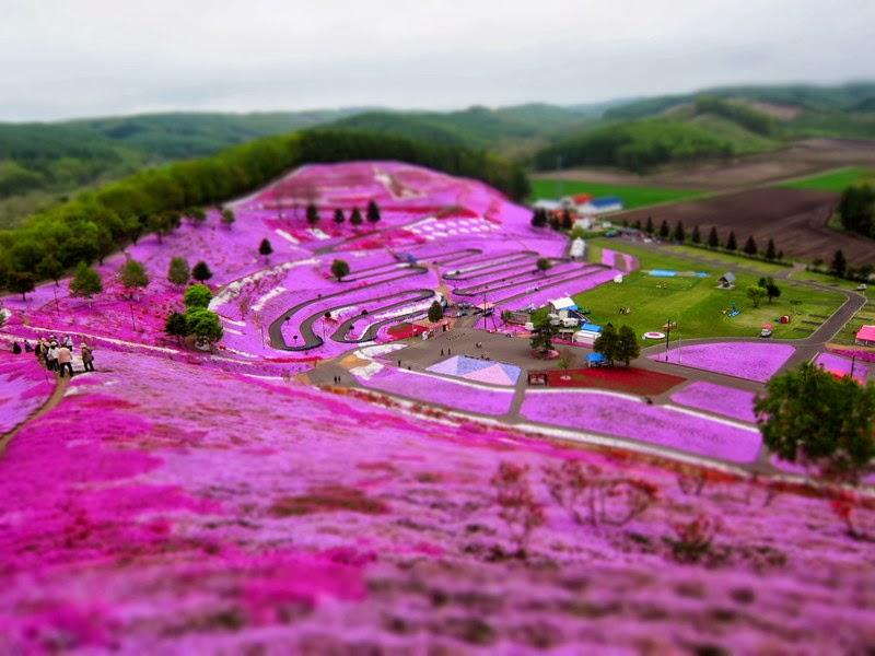 Takinoue Pink Moss Park