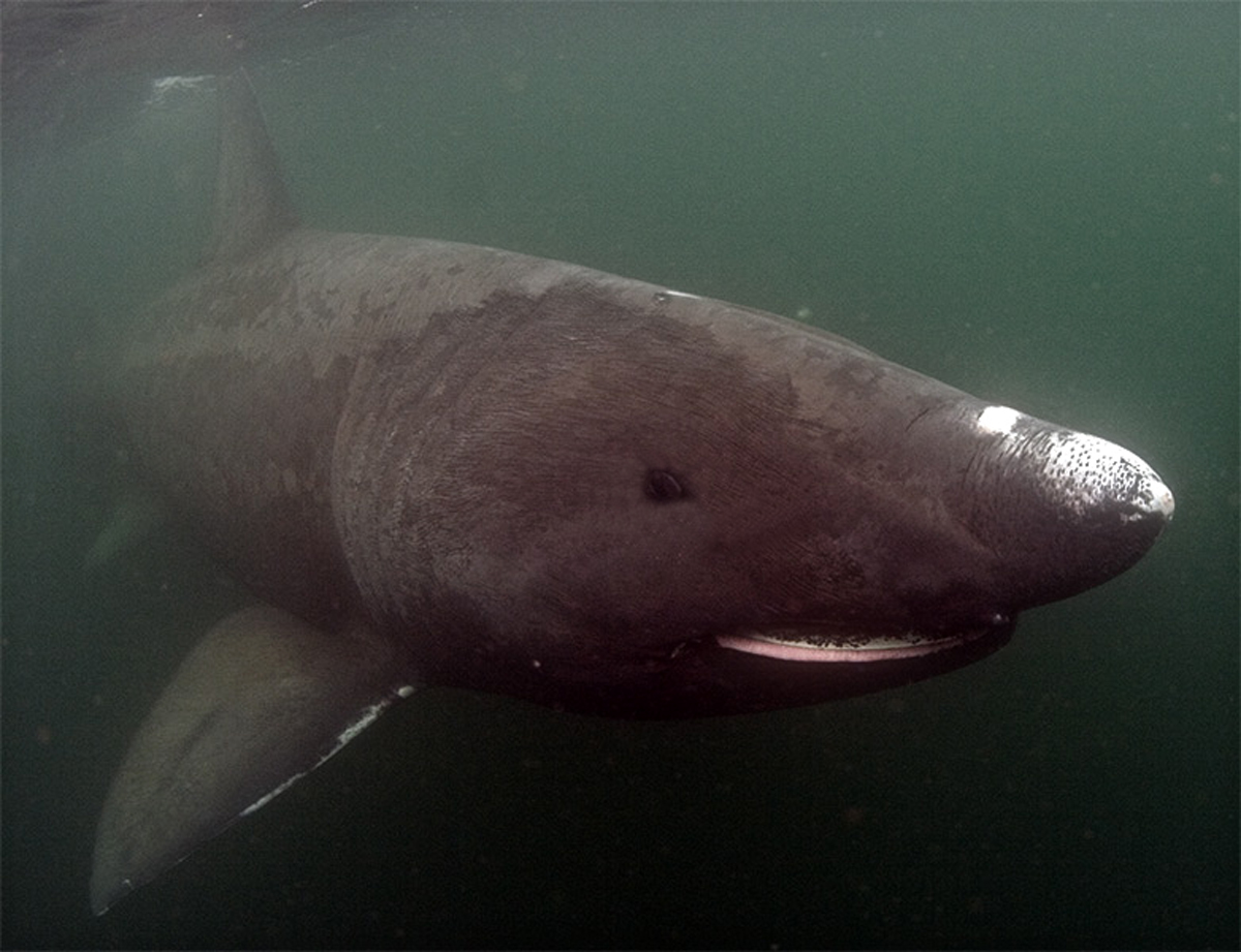 AMAZING MYSTERY VIDEOS: MEGALODON SIGHTING CAUGHT ON TAPE