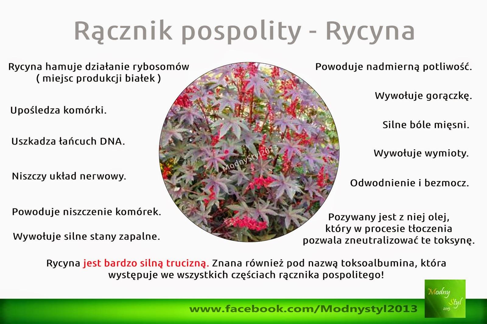 Rącznik pospolity a toksyczna rycyna