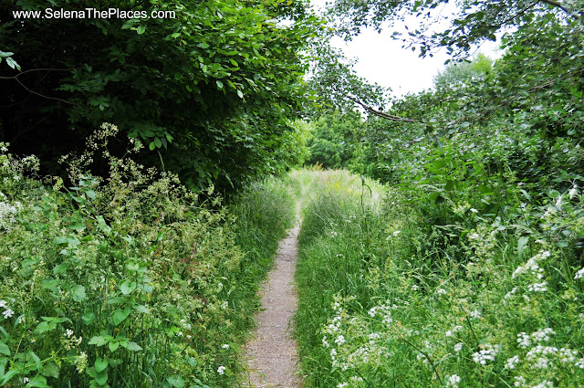 Walking Trails at Mudchute Park London