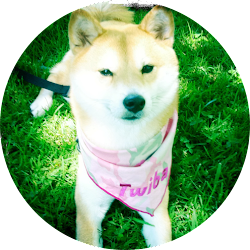 Tokyo: My Shiba Inu life