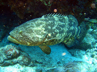 Knowing Complete Guide In Cultivating Grouper Fish For Maximum Results