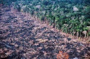 Degradação na Amazônia
