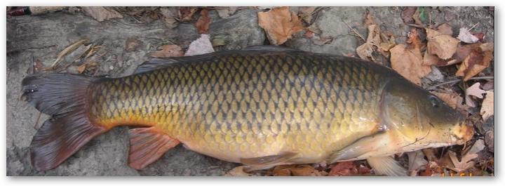 клев рыбы на рузе