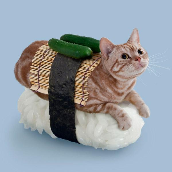 приколы над кошками