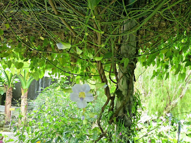 one-utama-flowering-vine