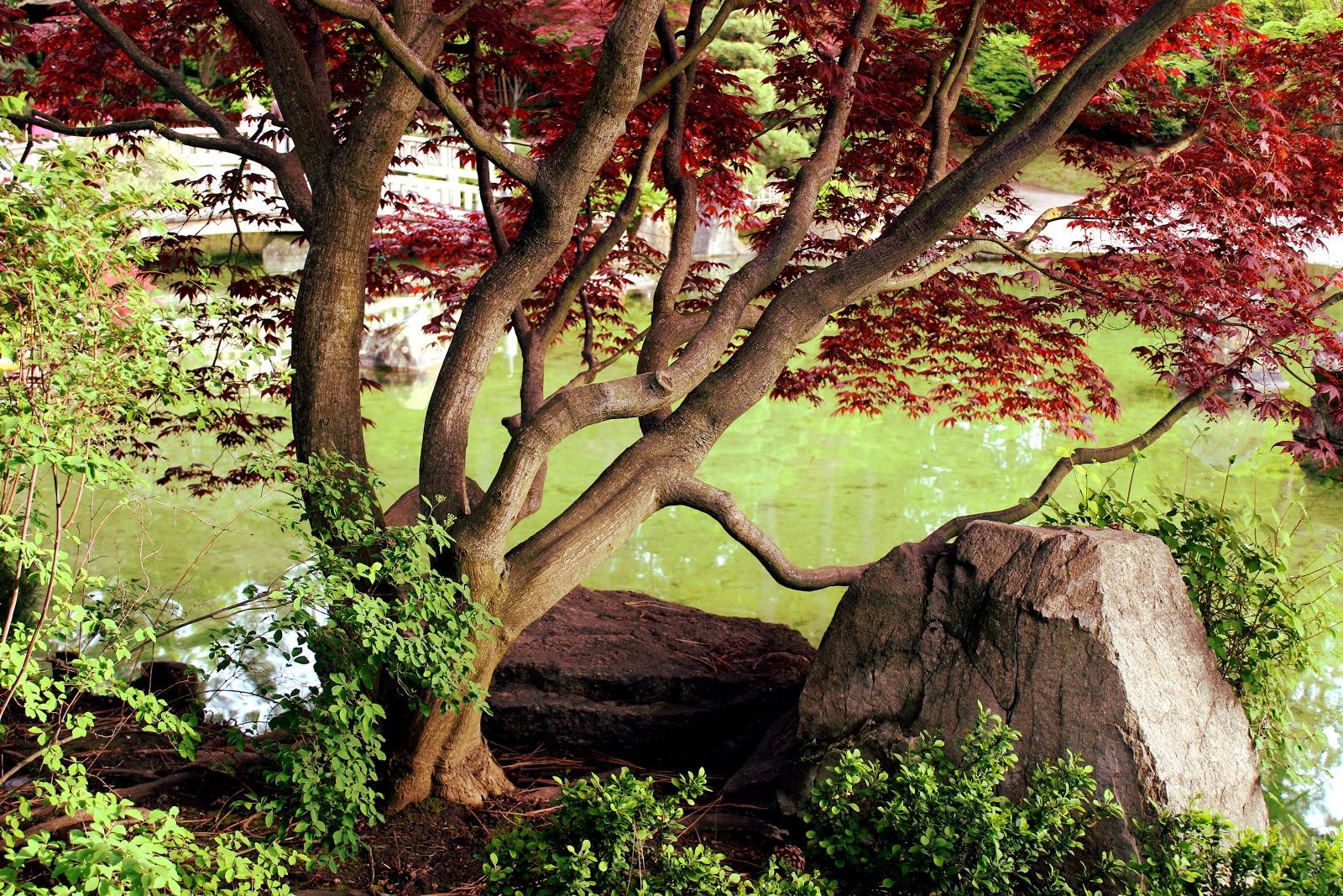 S U L U S T U Japanese Garden
