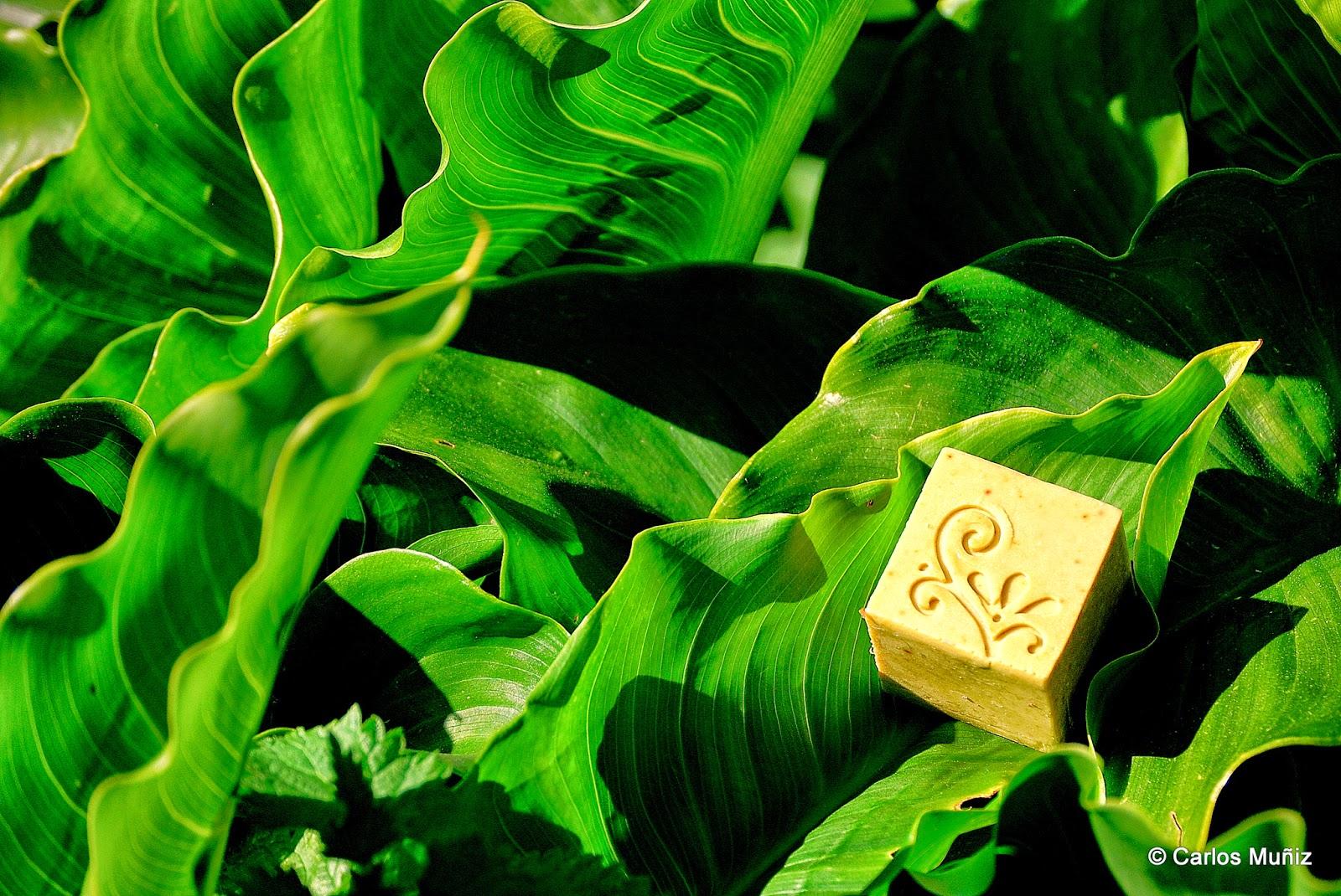 jabón de Alepo, jabón de laurel, jabón artesano, aceite de oliva, manteca de laurel