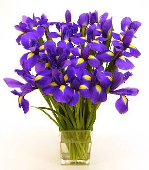 Orquídeas para mi amiga