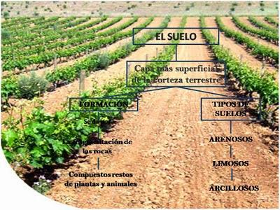 La importancia del suelo en el mundo cuidando nuestros suelos for Importancia de los suelos