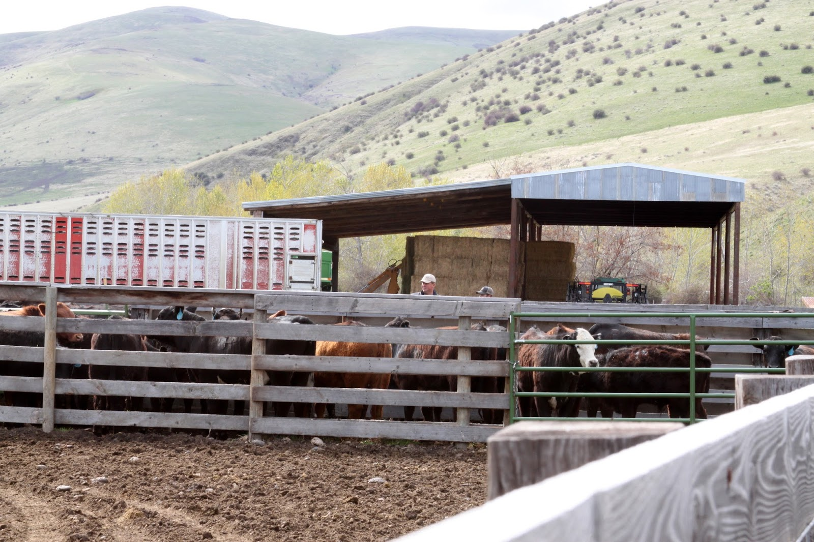 Breeding Box For Cattle Get The Breeding Box Set