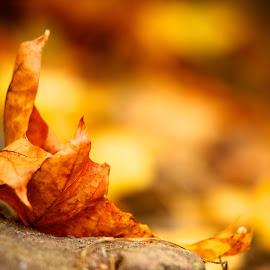 Gambar-gambar daun pohon