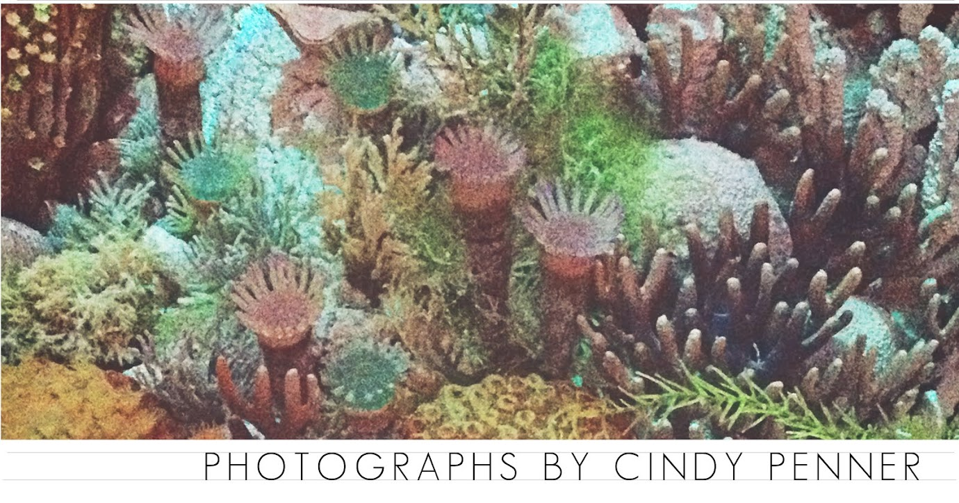 photographs by cindy penner