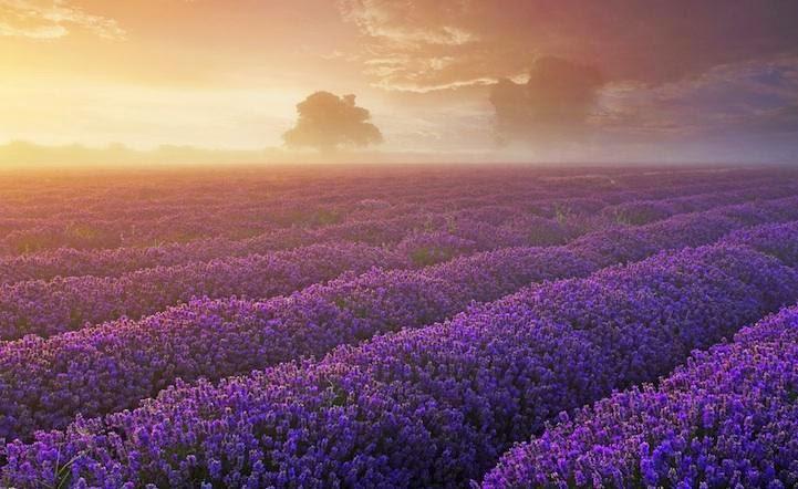phim nhung canh hoa truoc gio trọn bộ