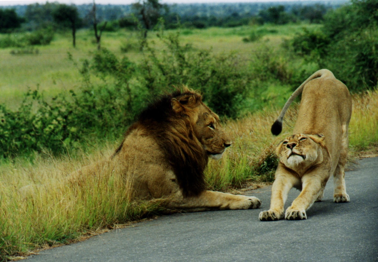 African safari animals - photo#6