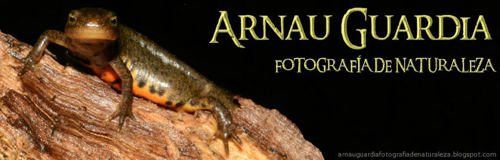 El Blog De Arnau Guardia - Fotografía·Naturaleza