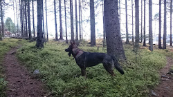 Sif på tur i skogen