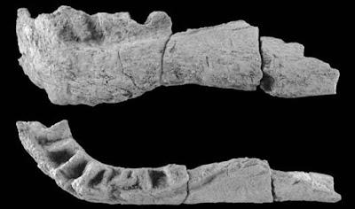 Demandasaurus bones