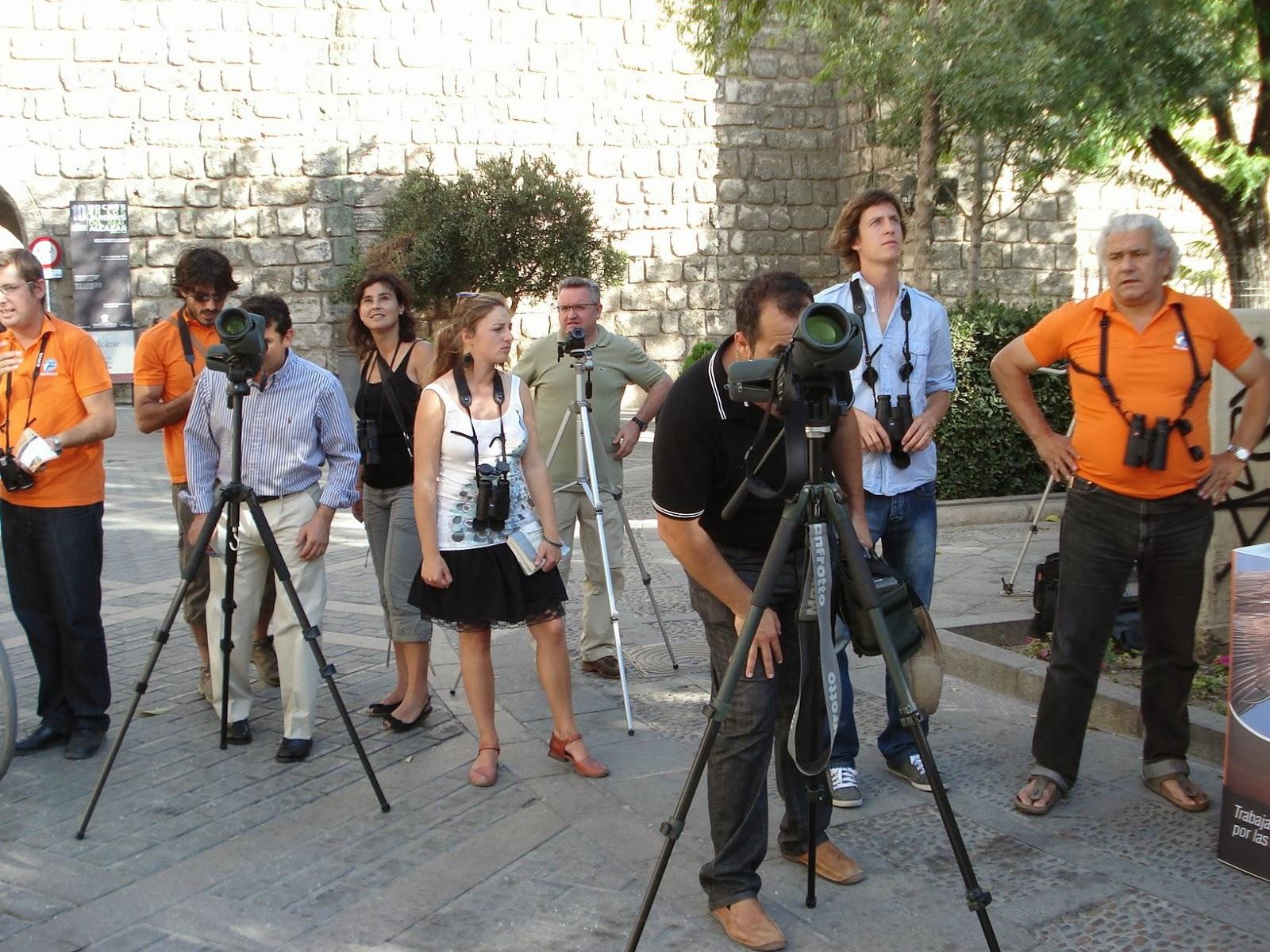 Observaciones Públicas. Educación Ambiental. Cernícalos en la Catedral de Sevilla 2011