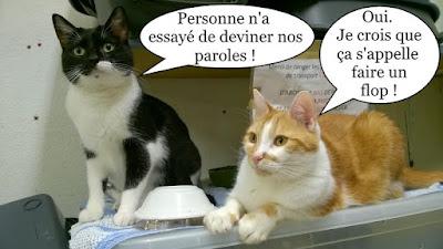 Duo de chats noir, roux, blanc.