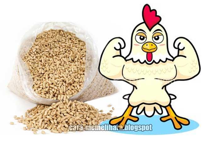 Standar Pakan Ayam Kampung Unggul Balitnak