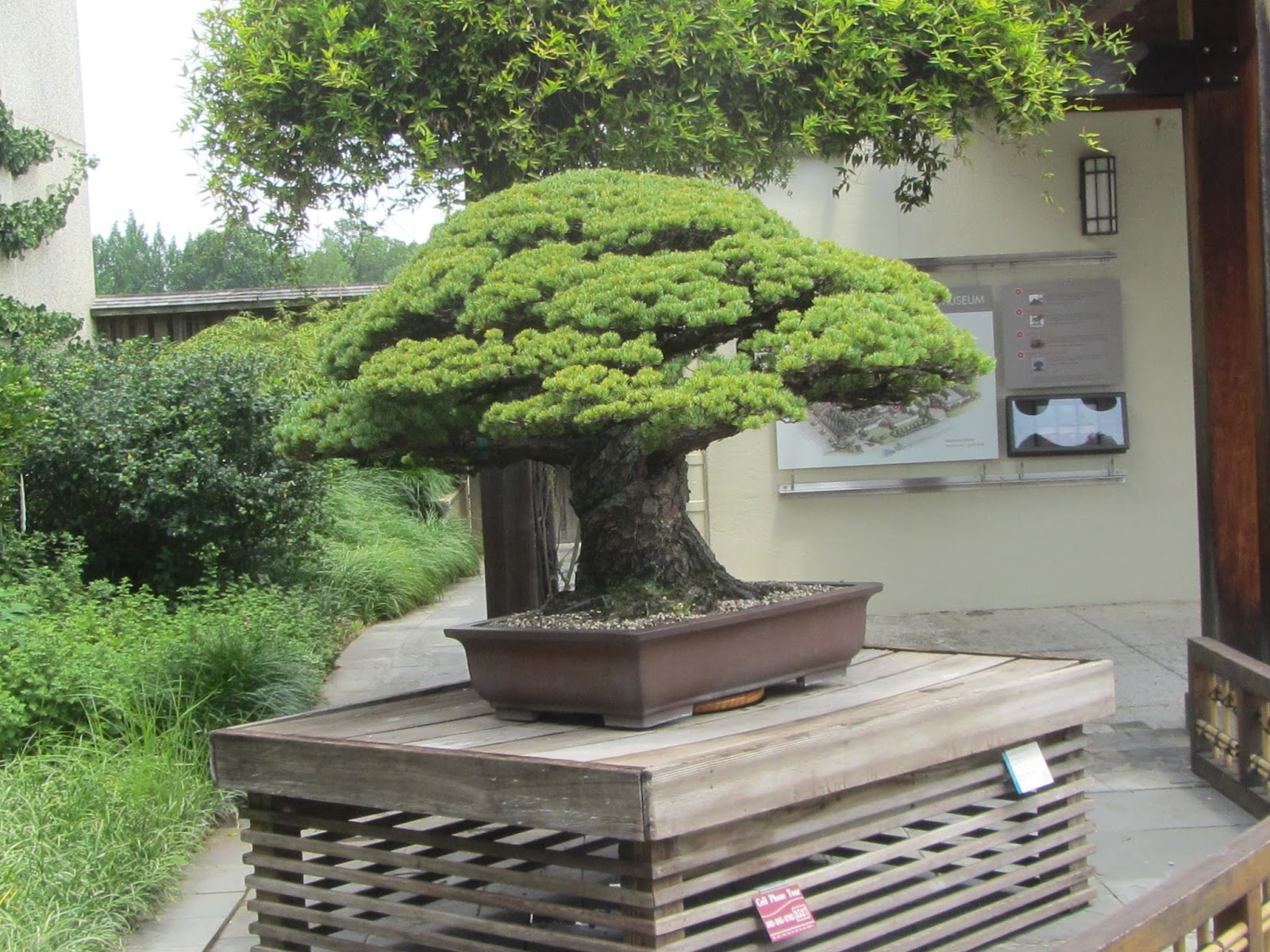 Birds Blooms Books Etc National Arboretum Bonsai