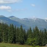 горы лес