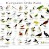 Ordo aves ada 16 macam