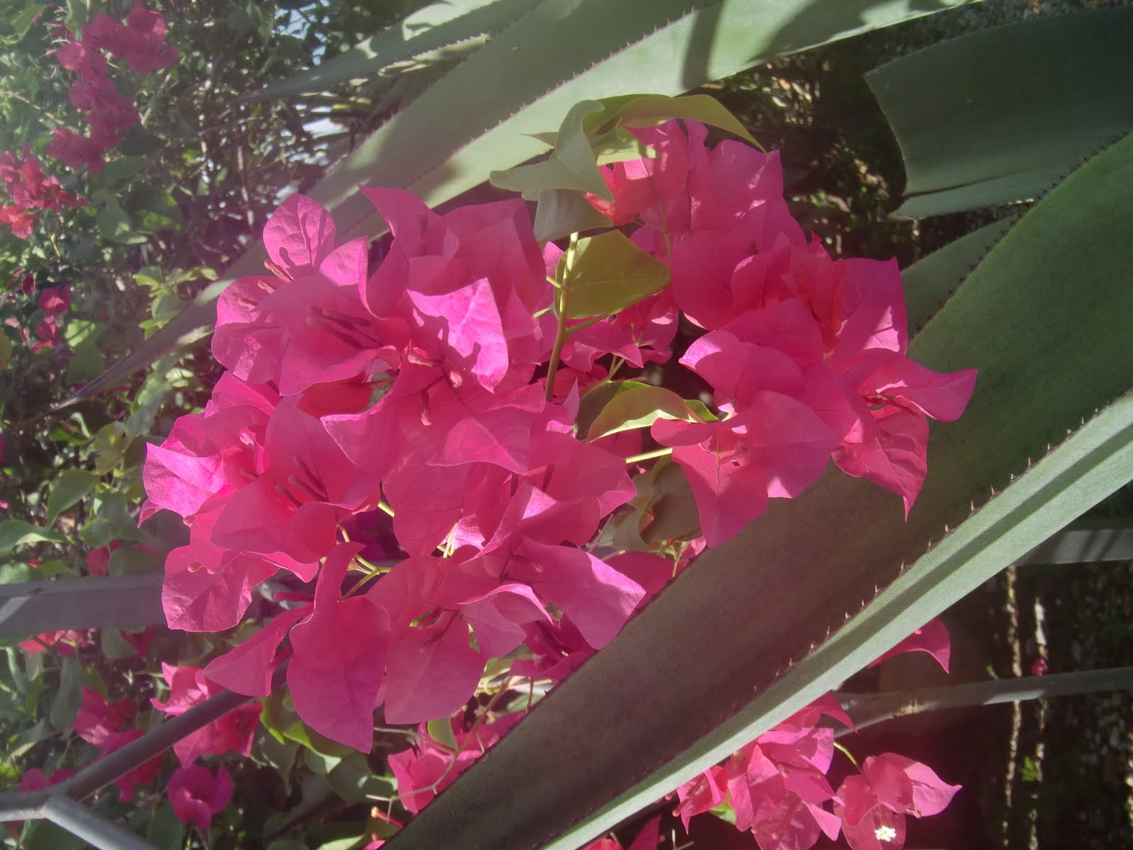 City Of Weston Unofficial Guide Great Plants And Flowers For