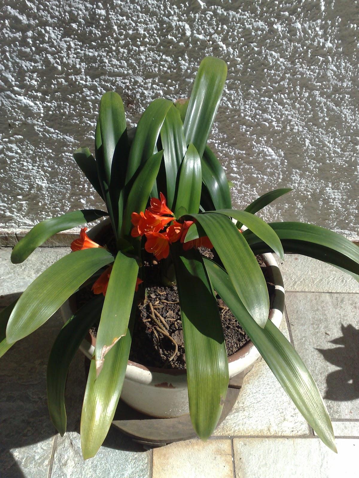 Canto do Feng Shui: Baguá das Flores #66382A 1200 1600